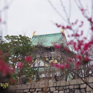 K-70と歩こう『大阪城公園の梅林』