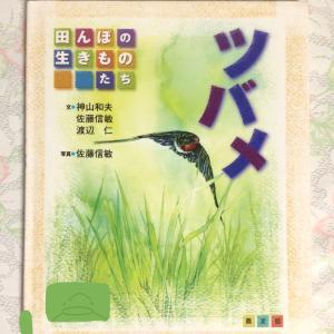 ツバメと電柱と鳥の本を読んだ