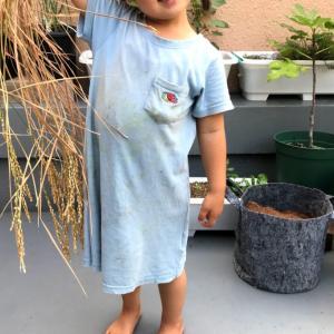 子どもとバケツ稲栽培も終盤。稲刈りをして、子育てで大切にしていることを改めて考えた。