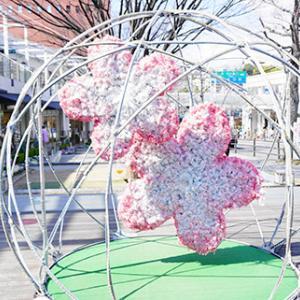 桜フォトスポットに桜ブレッド満喫@星ヶ丘