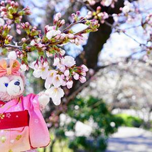 気になる岡崎の桜と桜城橋と桜お守り