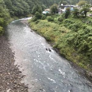 先週百匹釣った有田川へ