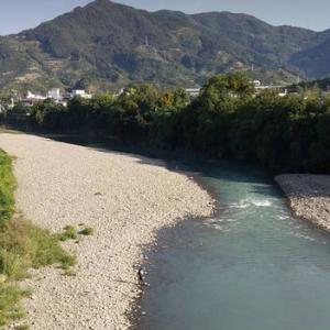 有田川の瀬付き鮎