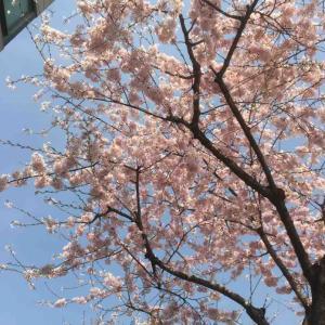 春のソウル 近所で桜を見る散歩 薬水駅4番出口