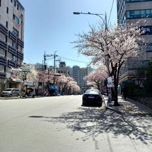 韓国バラエティ 薬水がテレビで紹介されたよ!! 「私は一人で暮らす」 キョンスジン編   <나 혼자 산다> 경수진