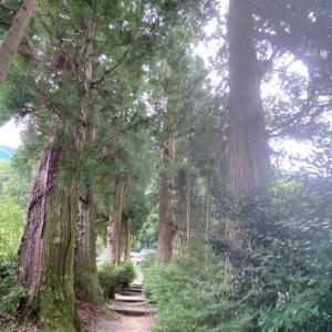 大人の遠足❗️奈良で浄化されまくり❣️大阪堺市レイキ伝授ヒーリングサロン愛直(あいな)