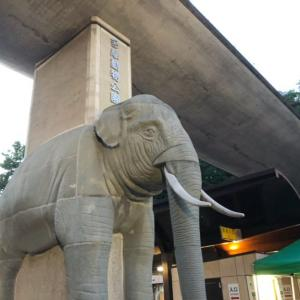 多摩動物公園・サマーナイトに行ってきた【1歳3ヶ月】