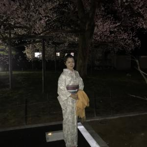 着物で夜桜見物