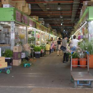 花市場 in 台湾・台北