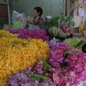 【タイ・バンコク】パーク・クローン花市場に潜入