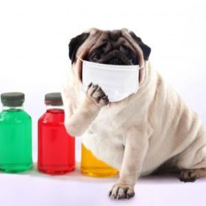 重症花粉症の特徴的な症状と花粉症対策のサプリメントについて