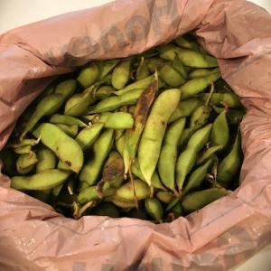 丹波の黒枝豆を美味しく茹でるコツ