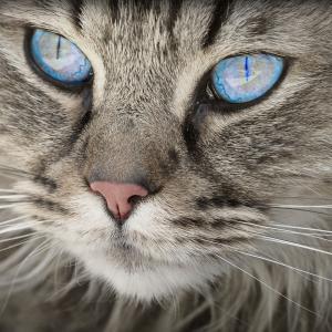 猫から学ぶ非モテコミット