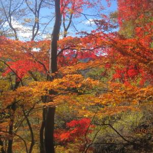 群馬南牧村 桧沢岳紅葉登山です。