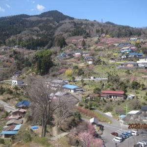 大内沢花桃の郷を見学しました。