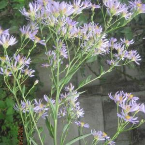 裏庭 秋彼岸頃の花と実