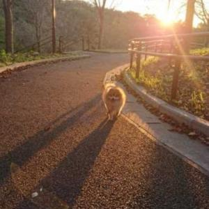 午後の散歩