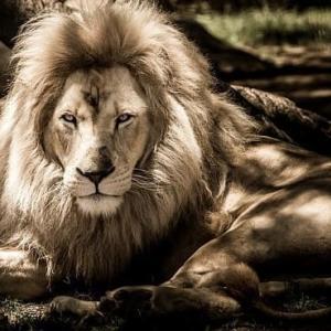 楾大樹『檻の中のライオン』読後雑感~2つの「政治」への恐怖心