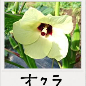 奥深き「野菜の花」の世界