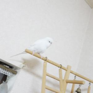 白いレティと白い壁