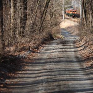 木漏れ日       (しなの鉄道)