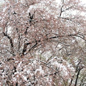 3月の雪が降る
