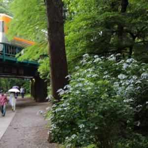 井の頭公園(1)      (京王井の頭線)