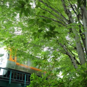 井の頭公園(2)      (京王井の頭線)