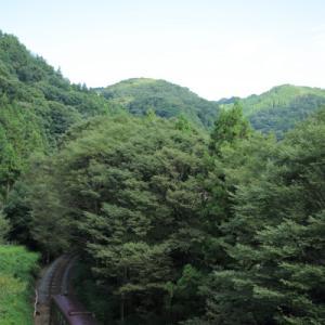 森をすり抜ける      (わたらせ渓谷鉄道)