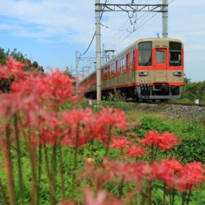おぶすま ヒガンバナ      (東武東上線)