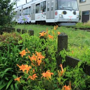 花のある線路      (東急世田谷線)