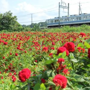 真夏の夢か 幻か      (東武東上線)