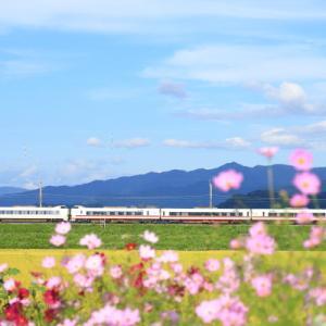 魚沼 秋の花      (北越急行線)