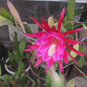 我が家の裏庭の花