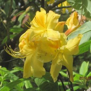鮮やかいろいろ今咲き誇る花たち