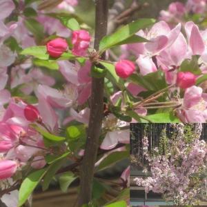 春です。可愛い花が、いろいろ咲いています!!