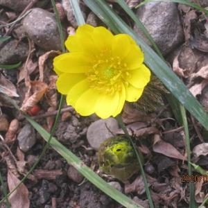 冬の花と鮮やかな実