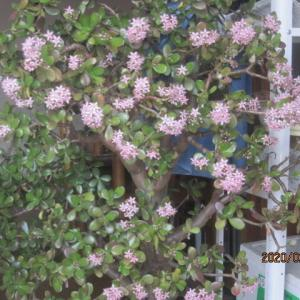 2月に咲く我が家の花!