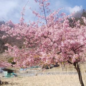 ご近所も裏庭も春が来た!