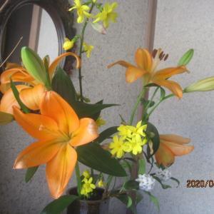 玄関のユリの花