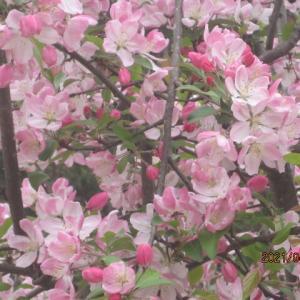 ご近所4月春の花巡り