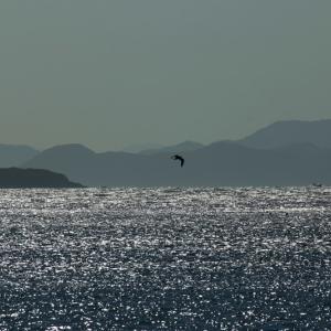 【風景写真】山陰の荒れた海(阿武町)