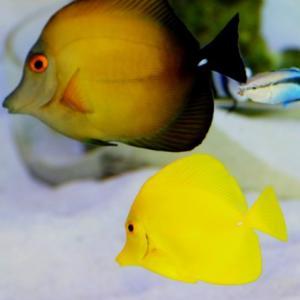 熱帯魚が可愛い(伊方きらら館)