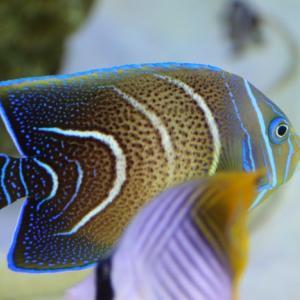 熱帯魚が可愛い(伊方きらら館)-2