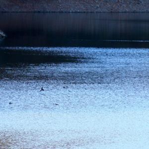 【風景写真】初冬の湖