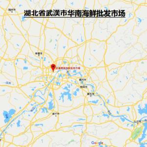 武漢市のウィルス性肺炎感染で新型コロナウィルスを検出