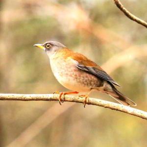 【野鳥】今日の野鳥たち(万葉の森)