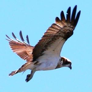 門前川河口の野鳥と戦闘攻撃機