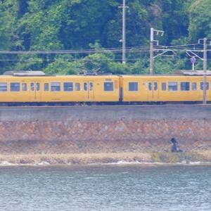 【鉄道写真】山陽本線大畠瀬戸の濃黄色115系電車