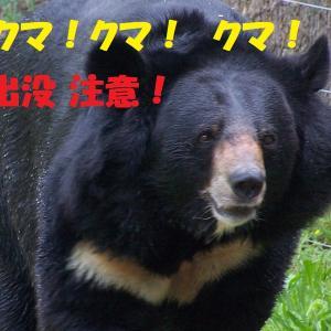 【速報】周南市夏切国道376号にクマ出没、人身被害!